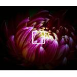 Bloom - 1 On/Off