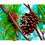 Pine Cone - 1 On/Off