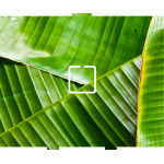 Banana Leaves - 1 On/Off